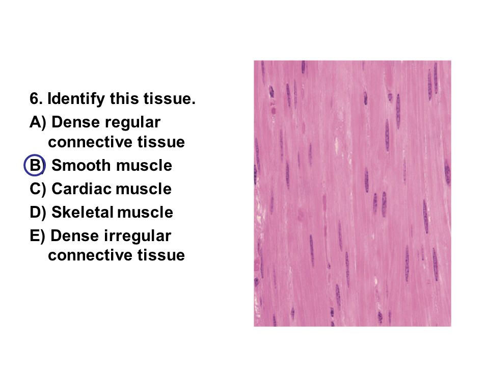 Muscular System - ppt video online download