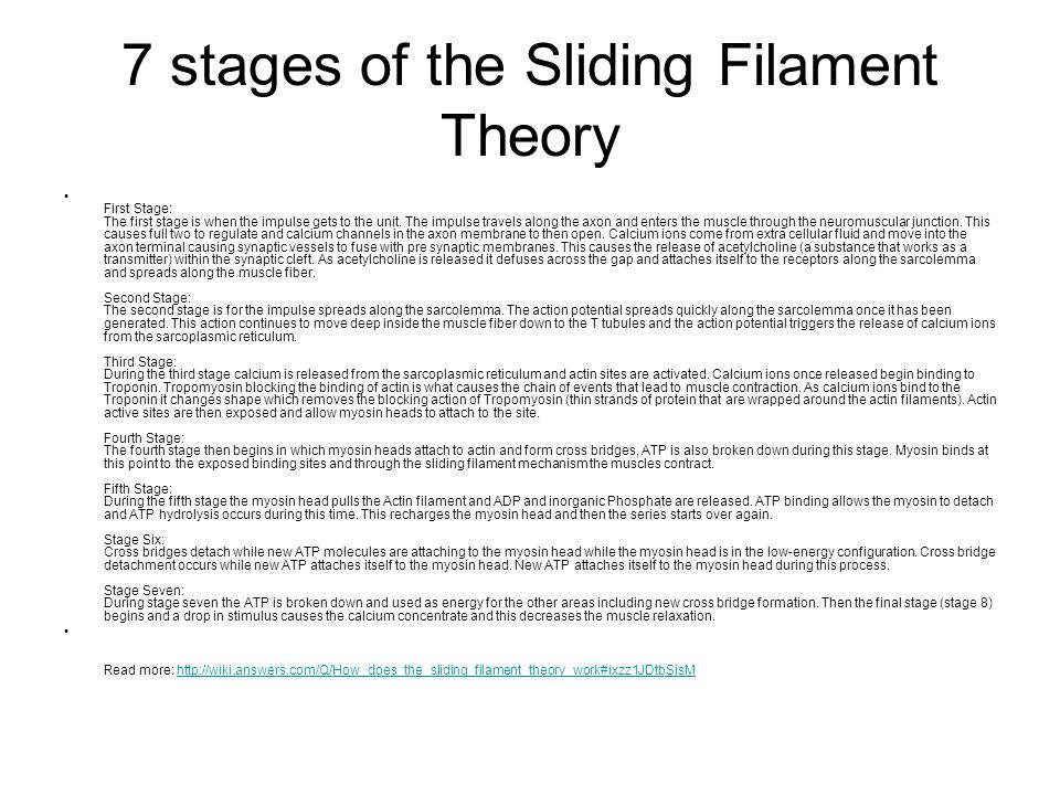 sliding fillamennt worksheet You question why well, the muscular system sliding filament theory worksheet answers is a compilation that has various characteristic considering others.