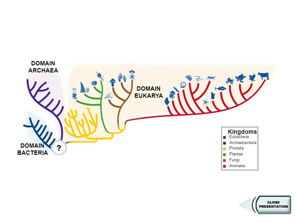 Figure Cladogram of Six Kingdoms and Three Domains