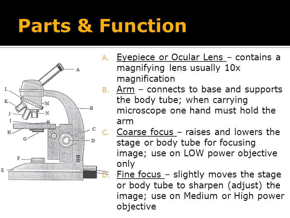 Compound light microscope ppt video online download 15 parts ccuart Images