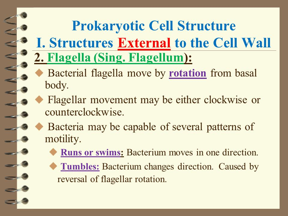 causes of movement of the bacteria myxococcus Start studying microbiology exam 3 learn vocabulary bacterial predator of other bacteria myxococcus: wolf packs flagella movement causes spin/whirl.