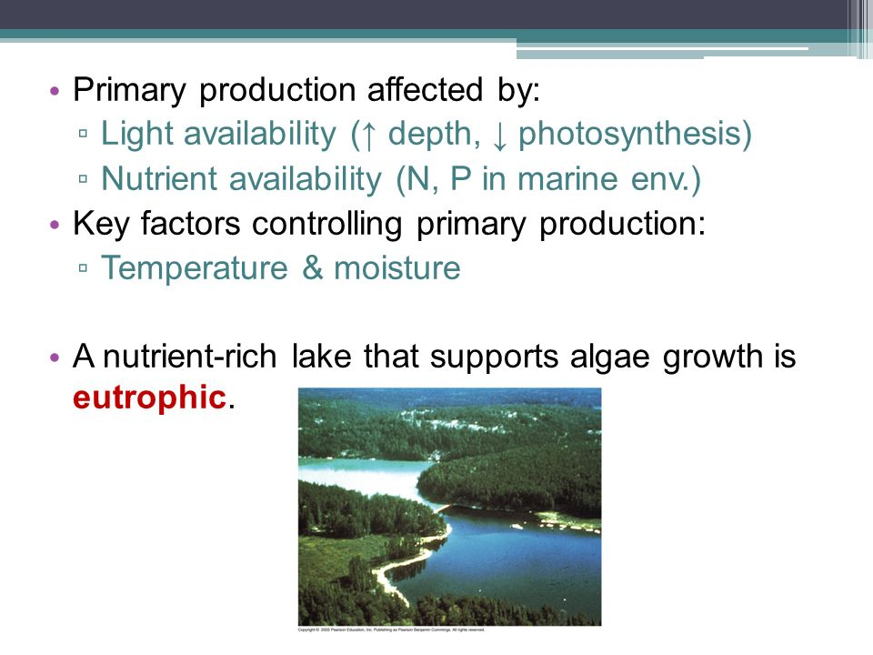 Primary production affected by: