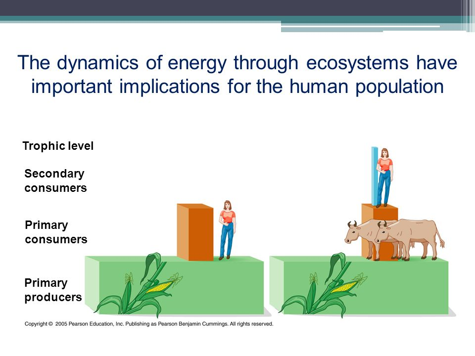 The dynamics of energy through ecosystems have important implications for the human population