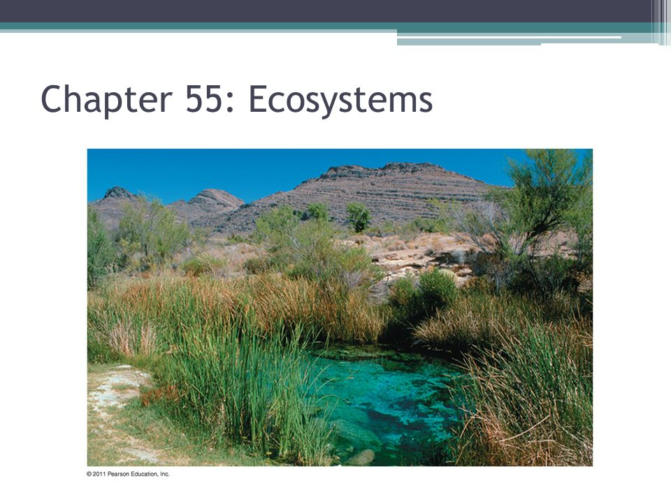 Chapter 55: Ecosystems