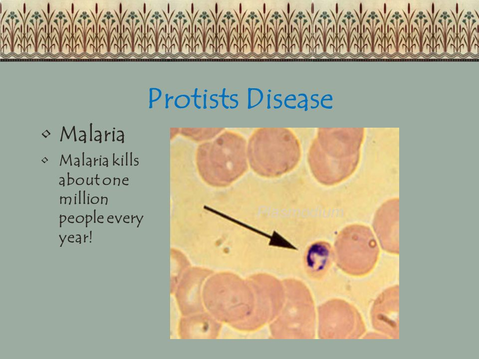 Protists Disease Malaria
