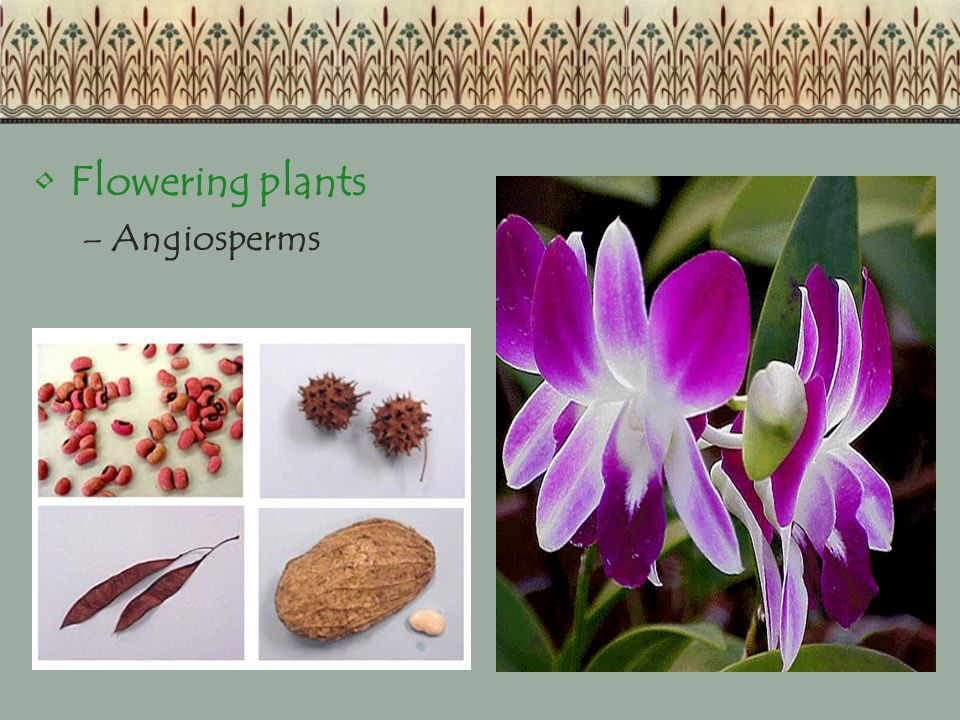 Flowering plants Angiosperms