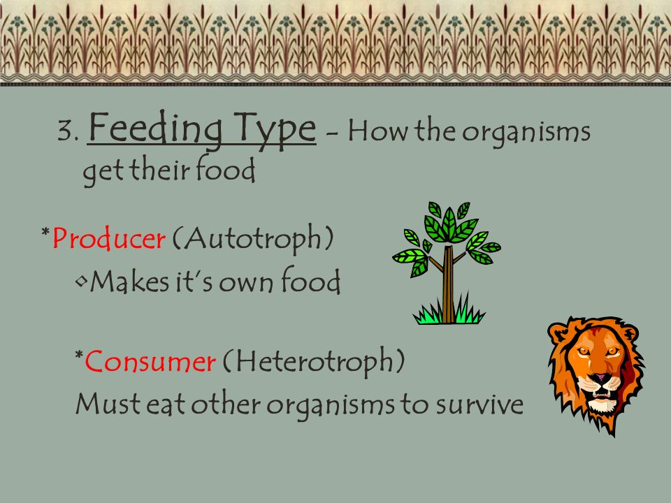 3. Feeding Type - How the organisms get their food
