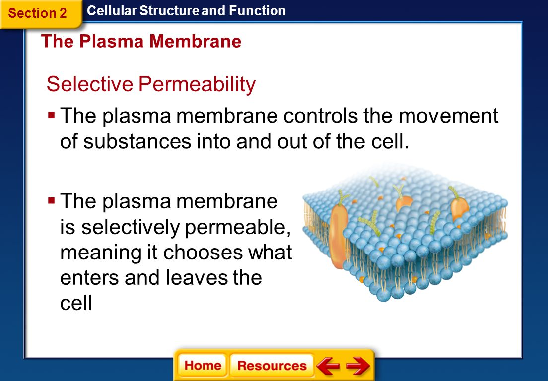 section 1 cellular structure and function cell discovery