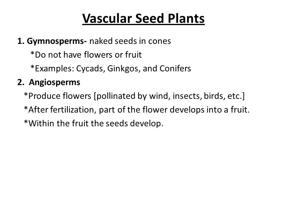 Vascular Seed Plants 1. Gymnosperms- naked seeds in cones