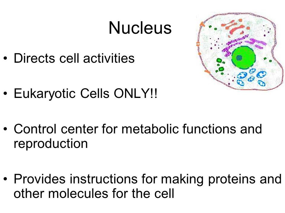 instructions for building proteins