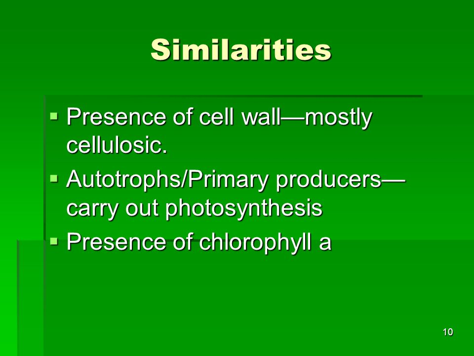 Similarities Presence of cell wall—mostly cellulosic.