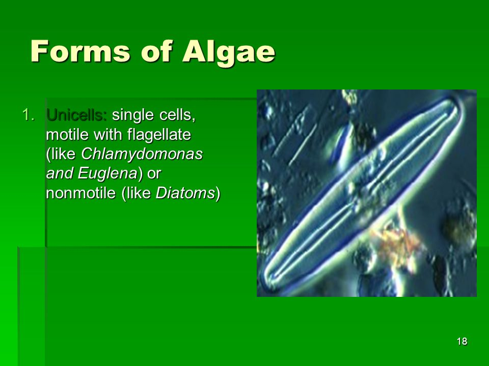 Forms of Algae Unicells: single cells, motile with flagellate (like Chlamydomonas and Euglena) or nonmotile (like Diatoms)