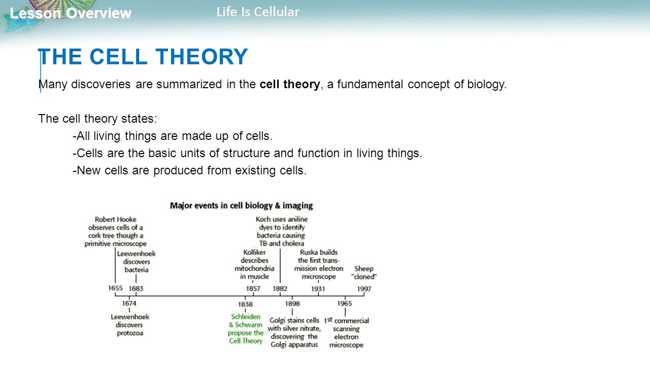 an analysis of the cell theory in cell biology The classical interpretation of modern cell theory begins with the  the first to claim the cell was the basic unit of biological life, but scholars give.