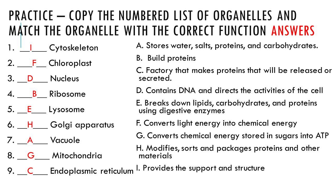 worksheet  function of the organelles worksheet  grass