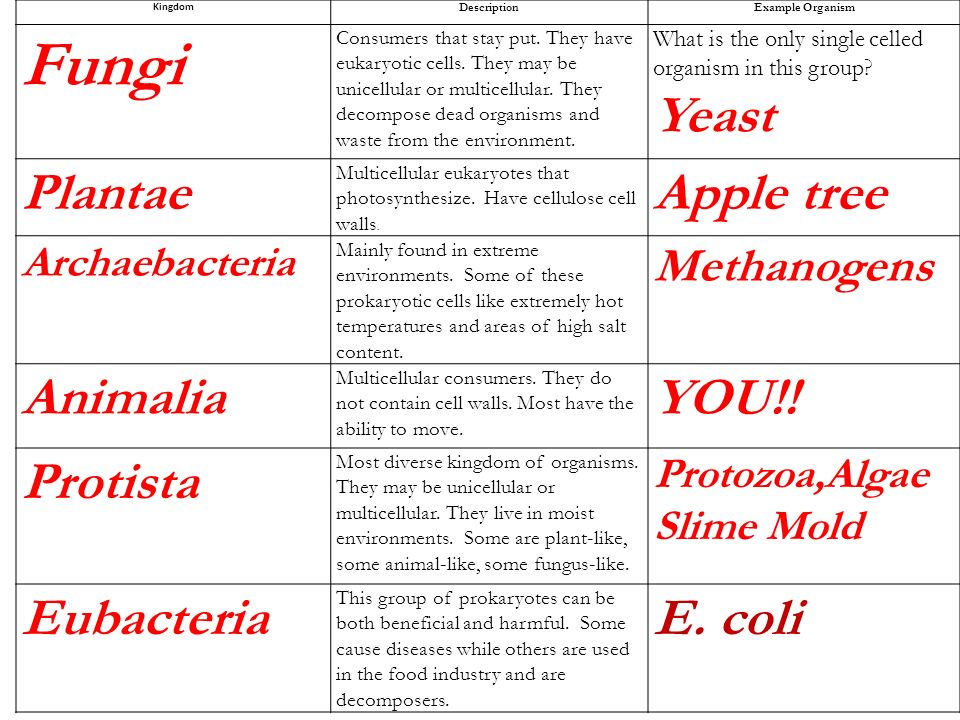 Differences Between Protozoa & Protists