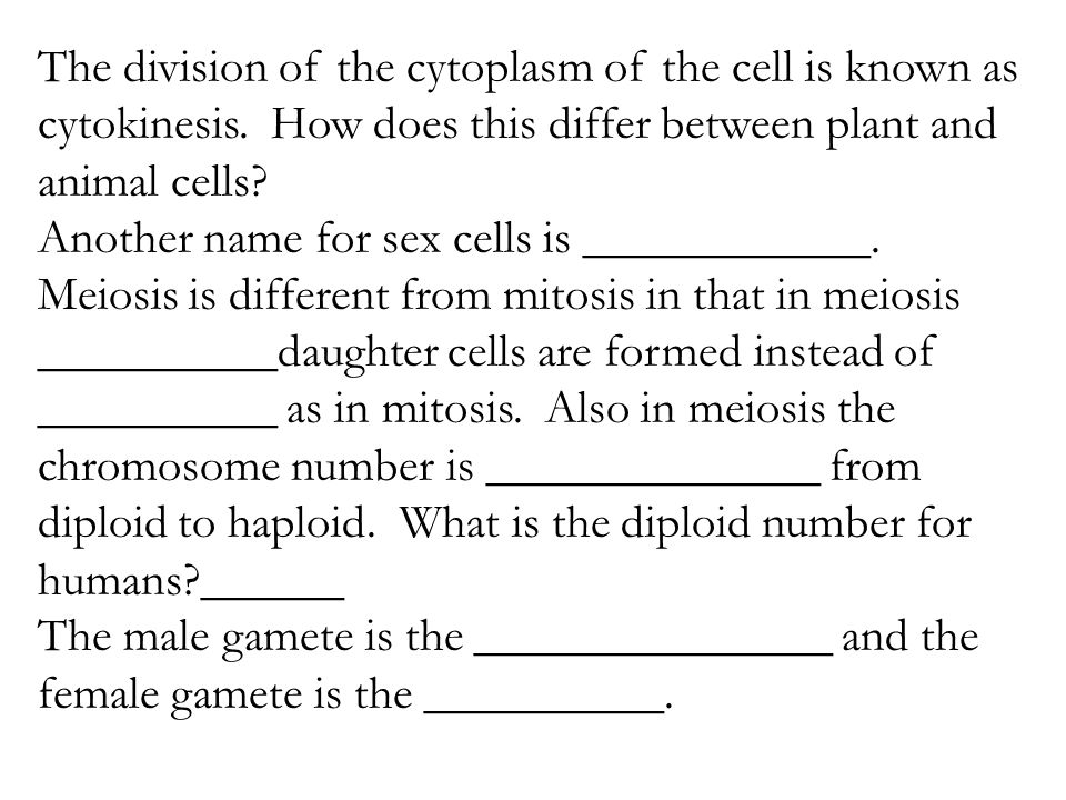 Plant and Animal Cells Morning Work Activities Writing Prompts