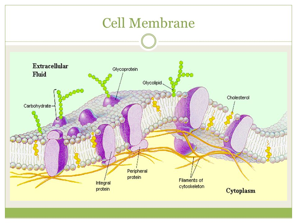 Chapter 3 Cell Structure And Function Ppt Video Online