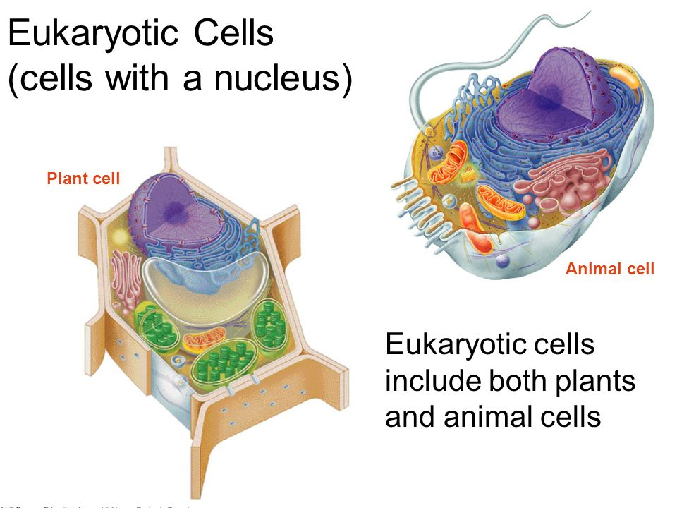 Microscopes & Cell...