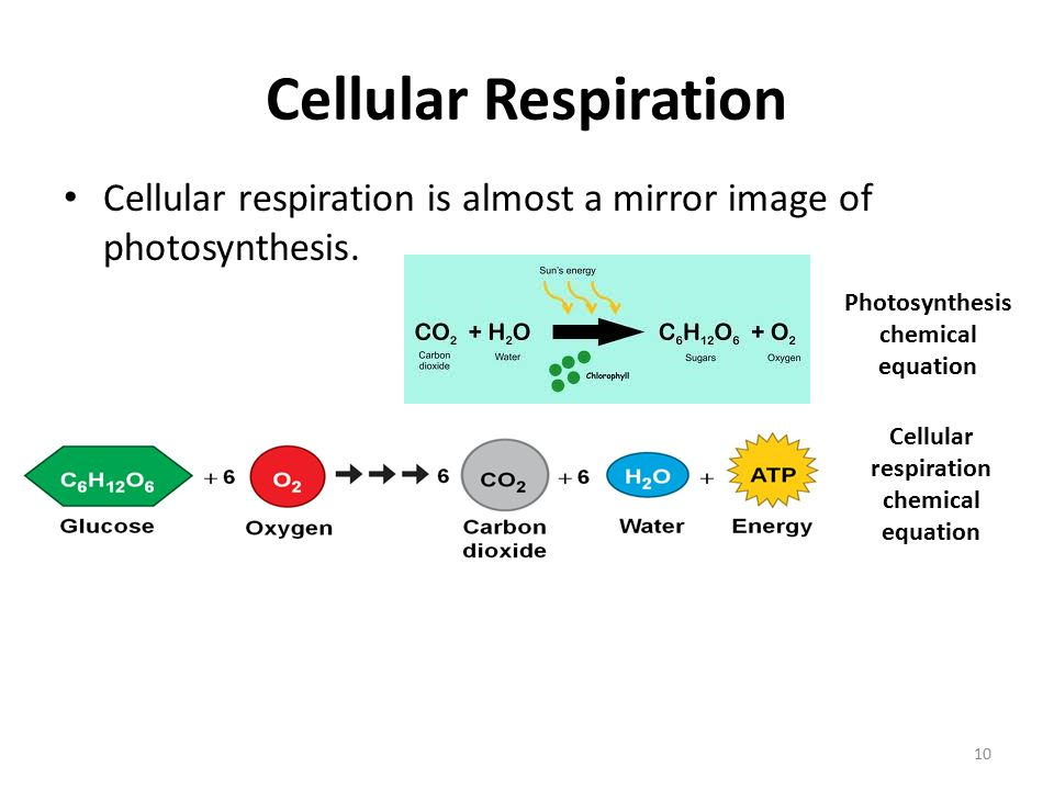 Chemical equation for cellular respiration diagram electrical cellular respiration an overview ppt video online download rh slideplayer com cellular respiration glucose steps of cellular respiration ccuart Image collections