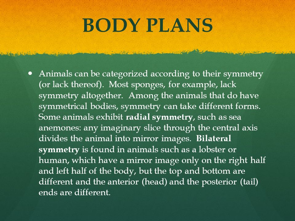 Animals, Part 1 Invertebrates - ppt download
