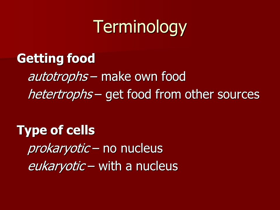 Terminology Getting food autotrophs – make own food