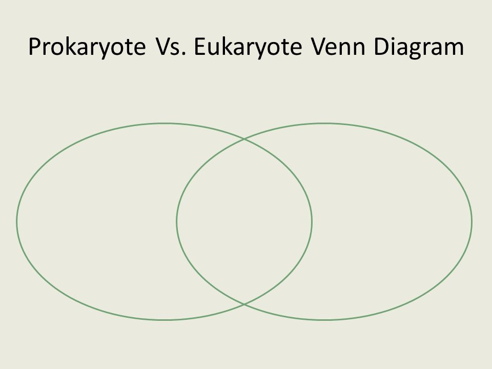 eukaryotic prokaryotic venn diagram