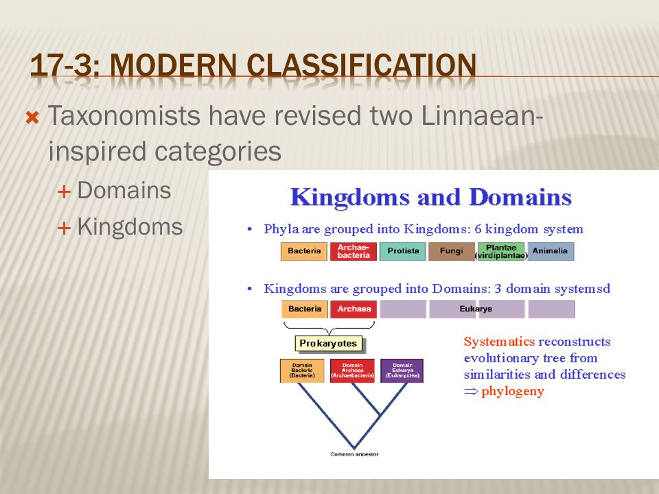 Chapter 17 Classification Of Organisms Ppt Video Online Download