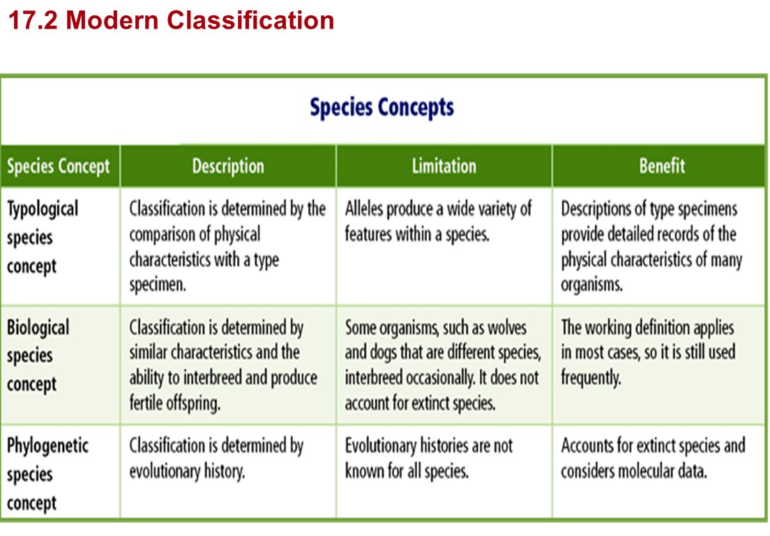 Section 18 2 Modern Evolutionary Classification Worksheet Answers – Section 18-2 Modern Evolutionary Classification Worksheet Answers