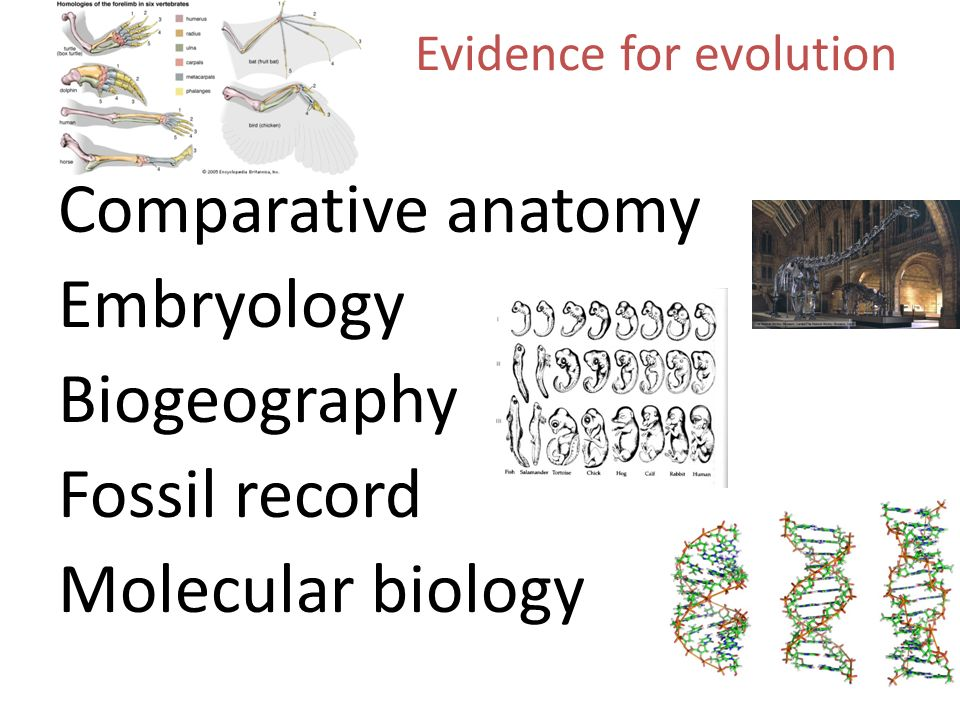 ap bio evolution study guide Ap biology - k bare section krystal bare, bs, mat ap biology email: textbook: resources : assignments: gradebook: google classroom northwest isd.
