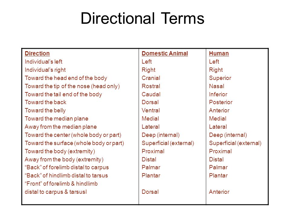 Anatomy directional terms activity