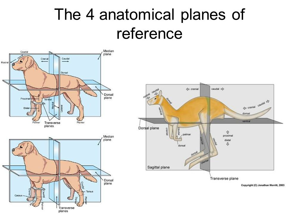 Images of Animal Body Planes - #SpaceHero
