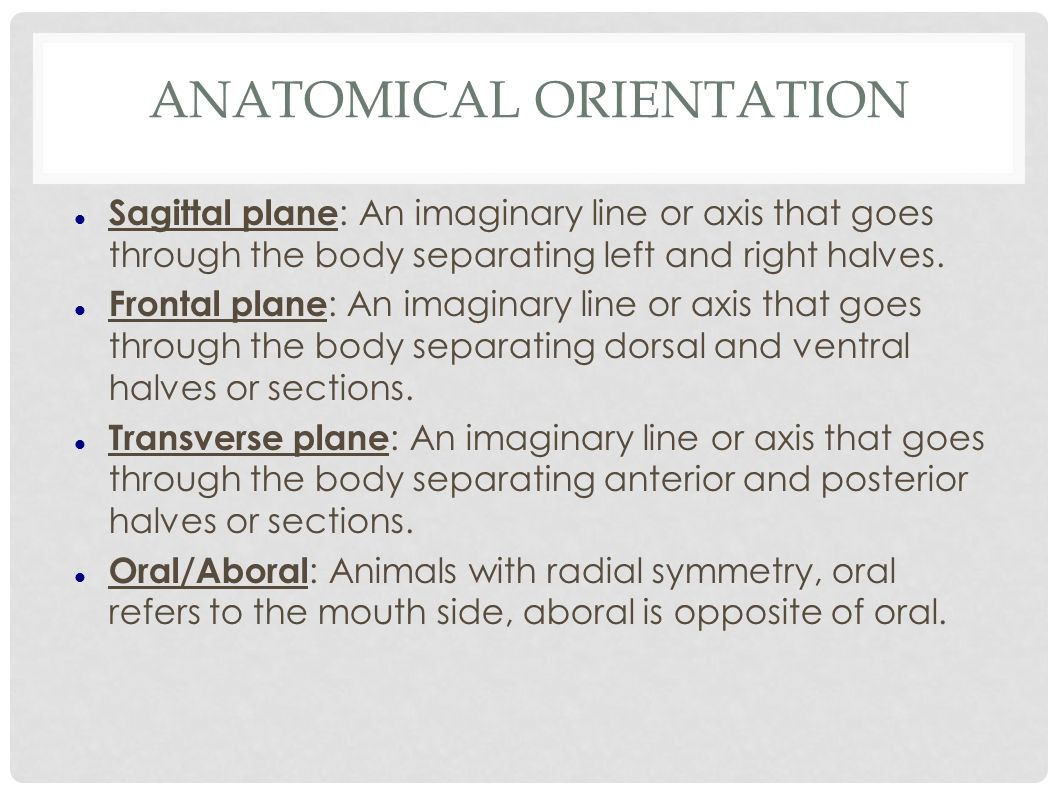 anatomical orientation Anatomical terminology dr a ebneshahidi anatomy • anatomy : is the study of structures or • anatomical position: body is erect, feet together.