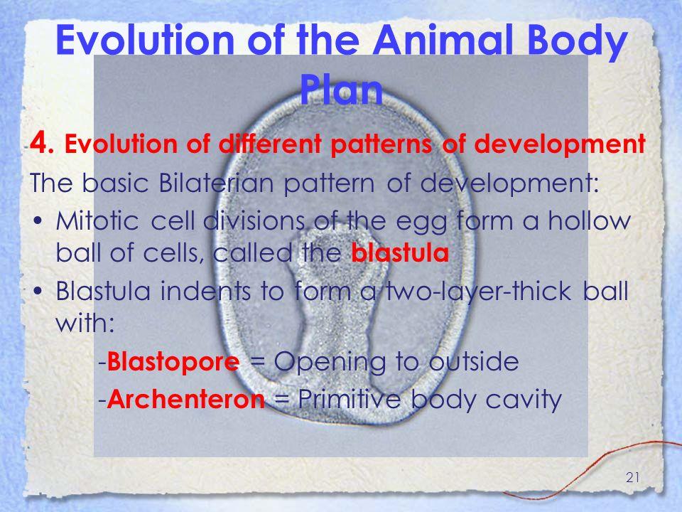 Overview of metazoan Diversity - ppt video online download
