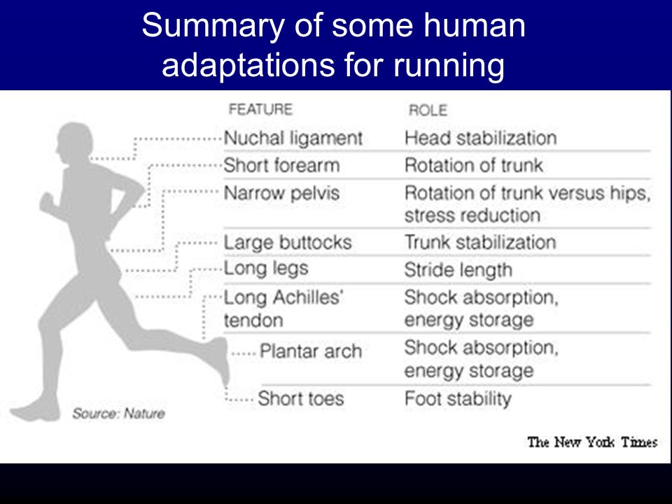 Born to Run: Running and Human Evolution - ppt video ...