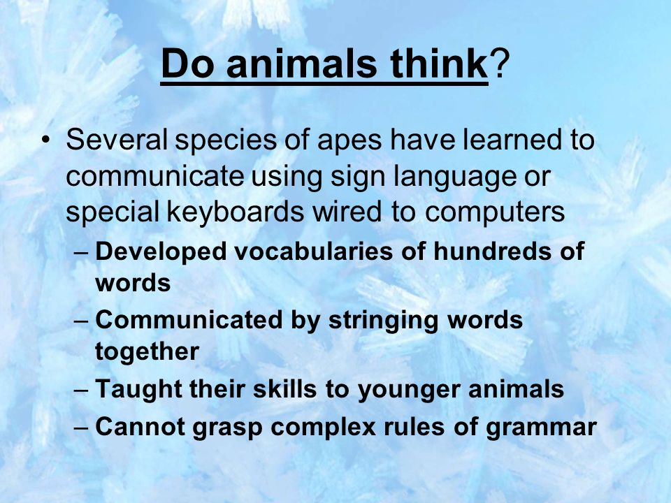 do animals have language All animals communicate but do they have language michele bishop details the four specific qualities we associate with language and investigates whether or not certain animals utilize some or all of those qualities to communicate.