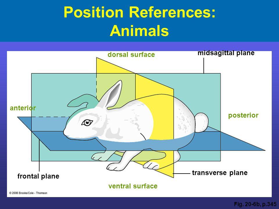 Animal organ system