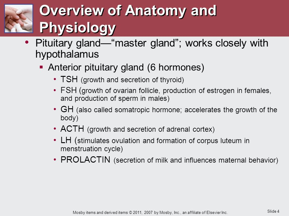 an overview of anatomy and physiology Overview: visual anatomy free is an interactive reference, and education tool with audio pronunciation now it include a rotational organ 3d overview.