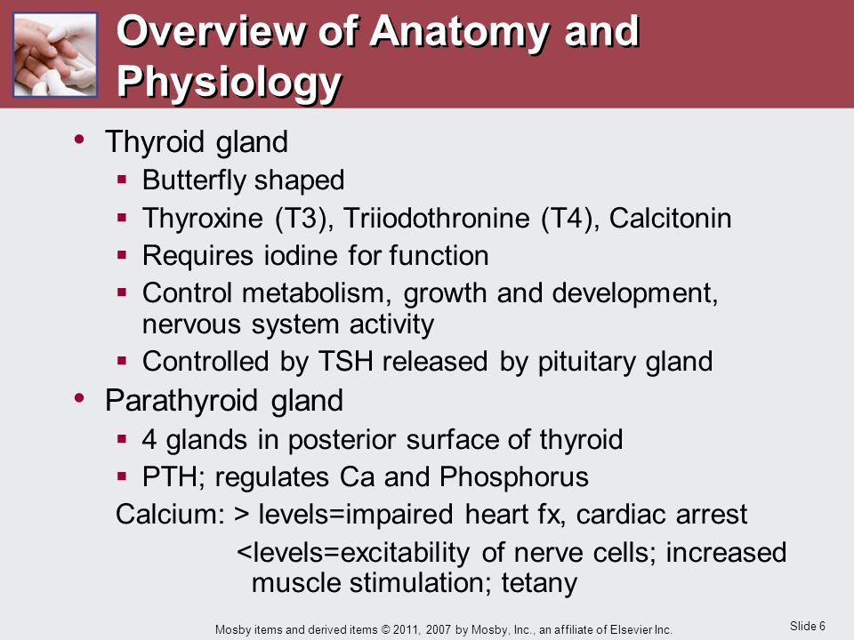 Magnífico Anatomy And Physiology Of Thyroid Gland With Picture ...