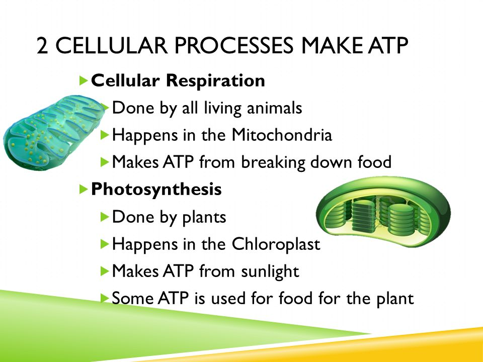plant cellular processes Photosynthetic cells are quite diverse and include cells found in green plants,  phytoplankton, and cyanobacteria during the process of photosynthesis, cells  use.