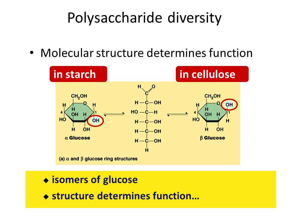 which tubes showed that starch or cellulose was still present tubes 2,6-dichlorobenzonitrile, a cellulose biosynthesis at a stage where cellulose is known to be present in cell pollen tubes showed a characteristic.