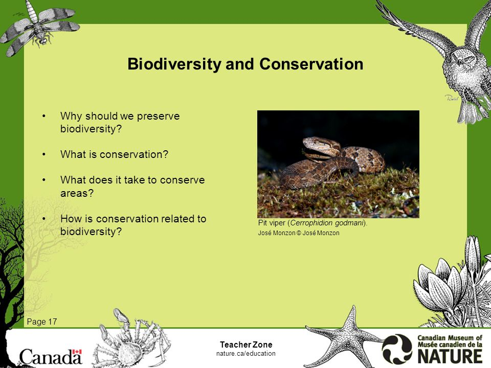 why preserve biodiversity Biodiversity loss is driven by local, regional, and global factors, so responses are also needed at all scales responses need to acknowledge multiple stakeholders.