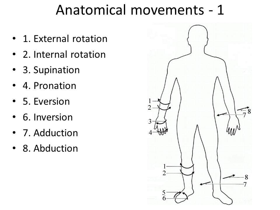 Schön Hyperextension Anatomie Definition Fotos - Anatomie Von ...