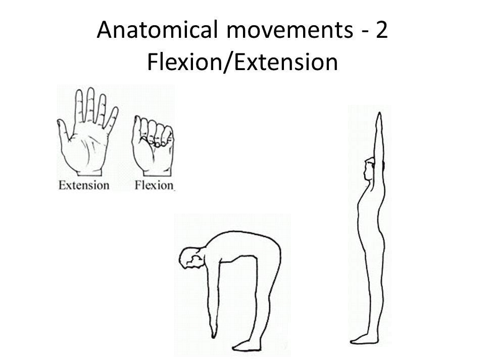 Wunderbar Definition Of Extension In Anatomy Fotos - Menschliche ...
