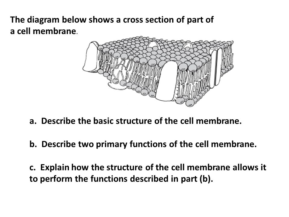 MCAS Review Cell Biology. - ppt download
