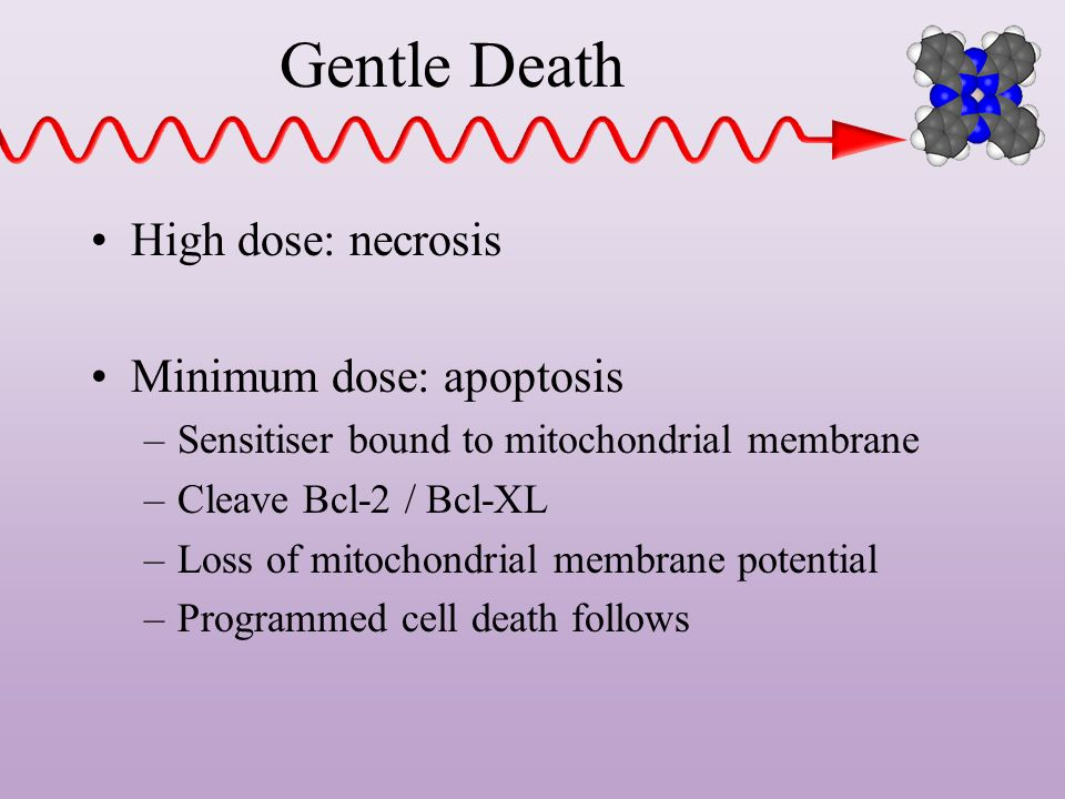 Gentle Death High dose: necrosis Minimum dose: apoptosis