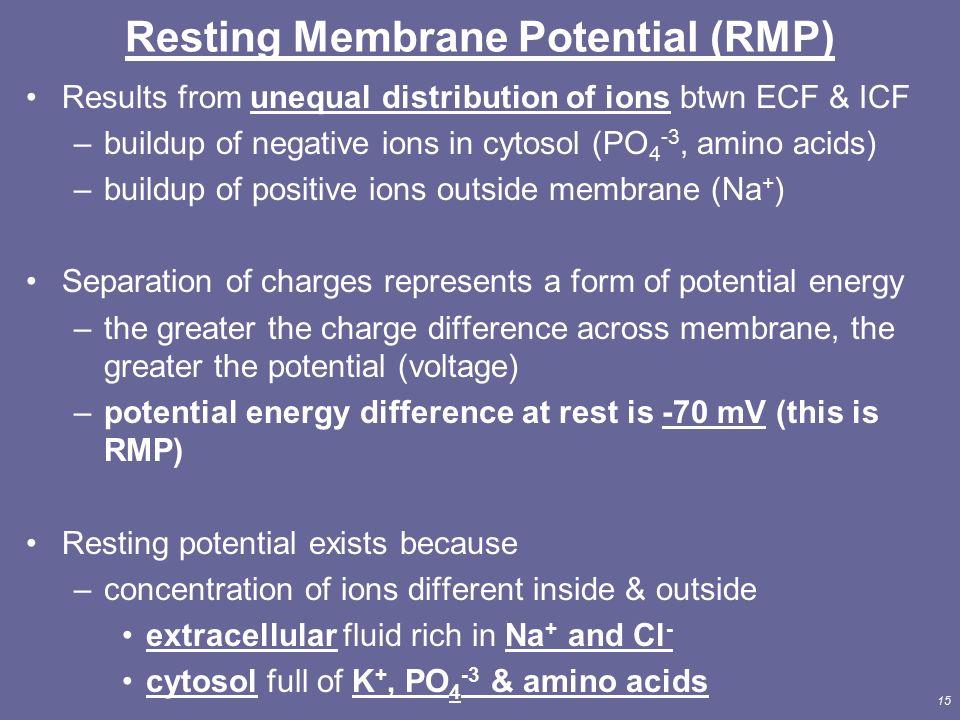 chap 6 resting membrane potential rmp Baer brainstem auditory evoked response(potential) bal 1)  골반 염증성 질환 [chap 89, hp 534-8] 2)  rmp right mento-posterior rmr resting metabolic rate.