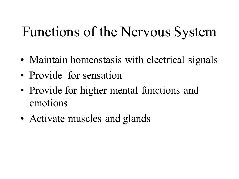 Chapter 9 The Nervous System - ppt video online download