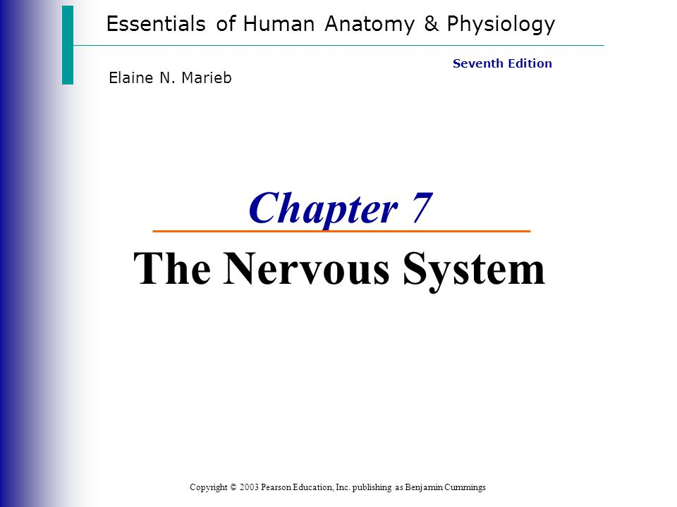 Chapter 7 The Nervous System - ppt video online download