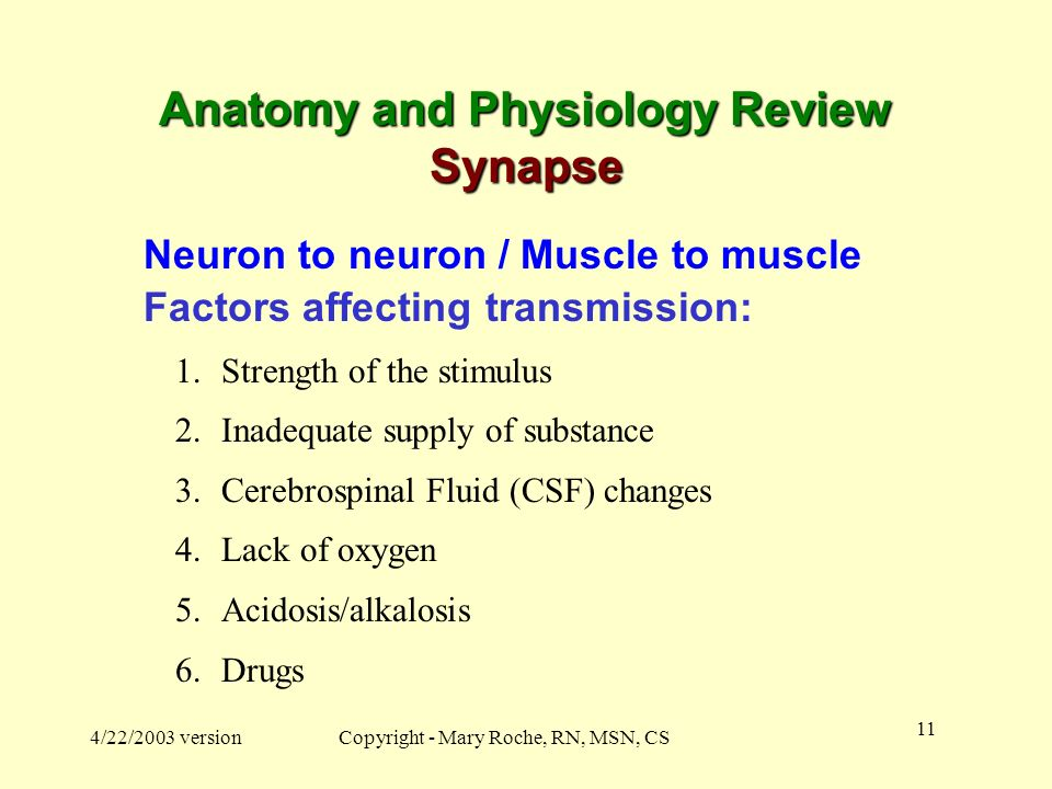 Anatomy and Physiology Review Synapse