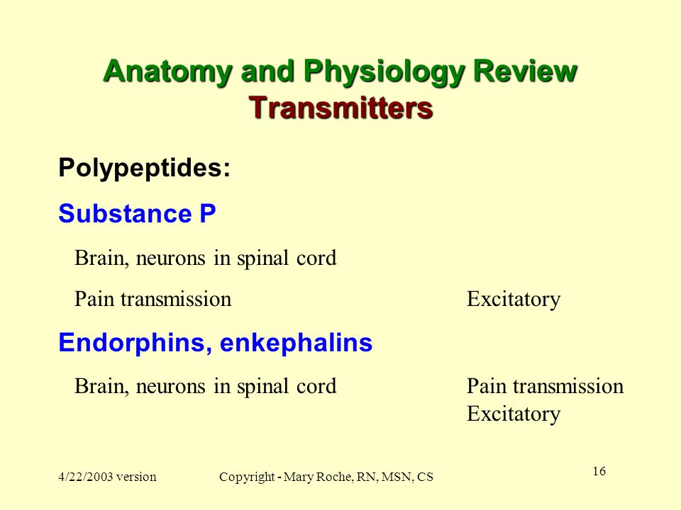 Anatomy and Physiology Review Transmitters